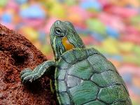 turtle-182121_640 200