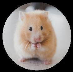 hamster circle crop