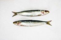 sardines-3732726_640 (2)