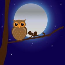 night owl pixabay