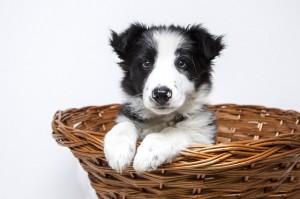puppy-2298832_640 (2)