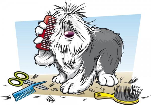 sheepdog haircut