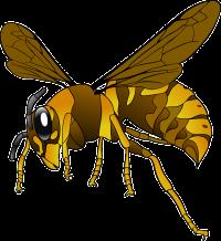 hornet-151003_640